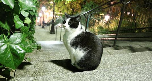 Niet elke kat gaat naar Parijs, maar de kat van Ome Willem ging wel.